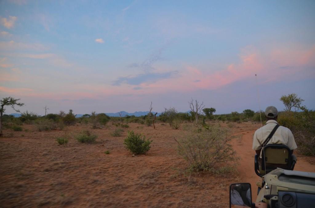 safari (10 von 129)