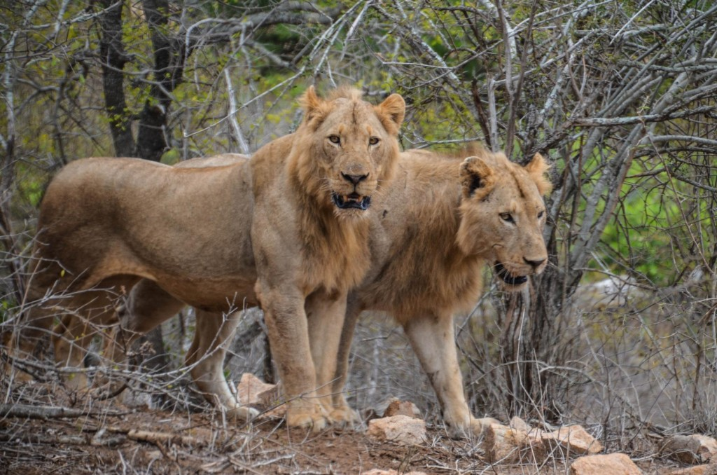 safari (110 von 129)