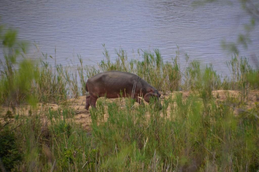 safari (118 von 129)