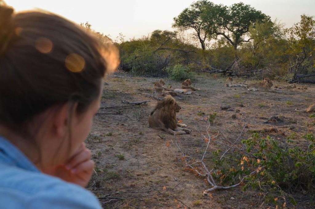 safari (18 von 129)