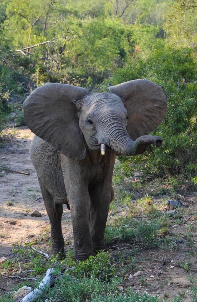 safari (29 von 129)
