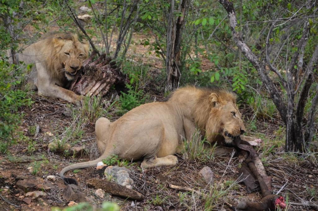 safari (56 von 129)