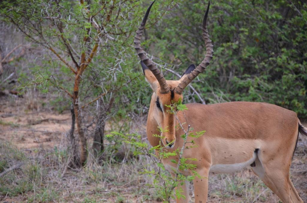 safari (64 von 129)