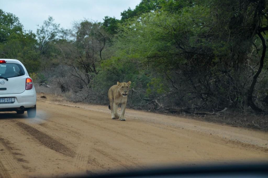 safari (77 von 129)