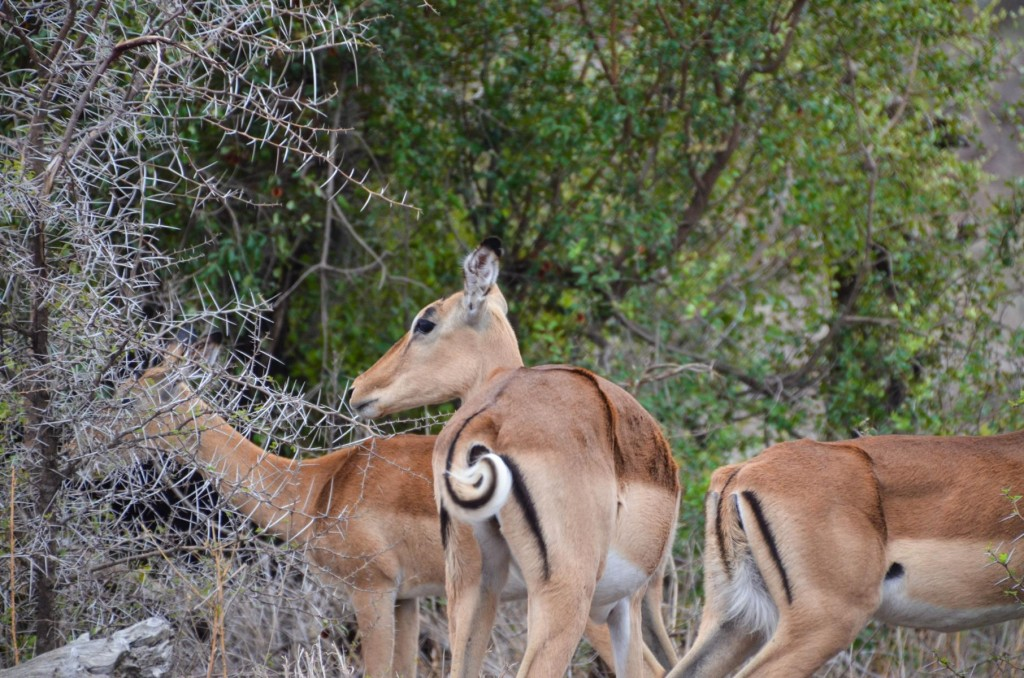 safari (79 von 129)