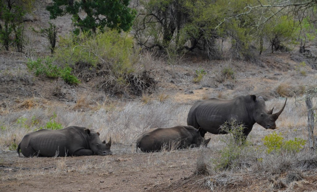 safari (81 von 129)