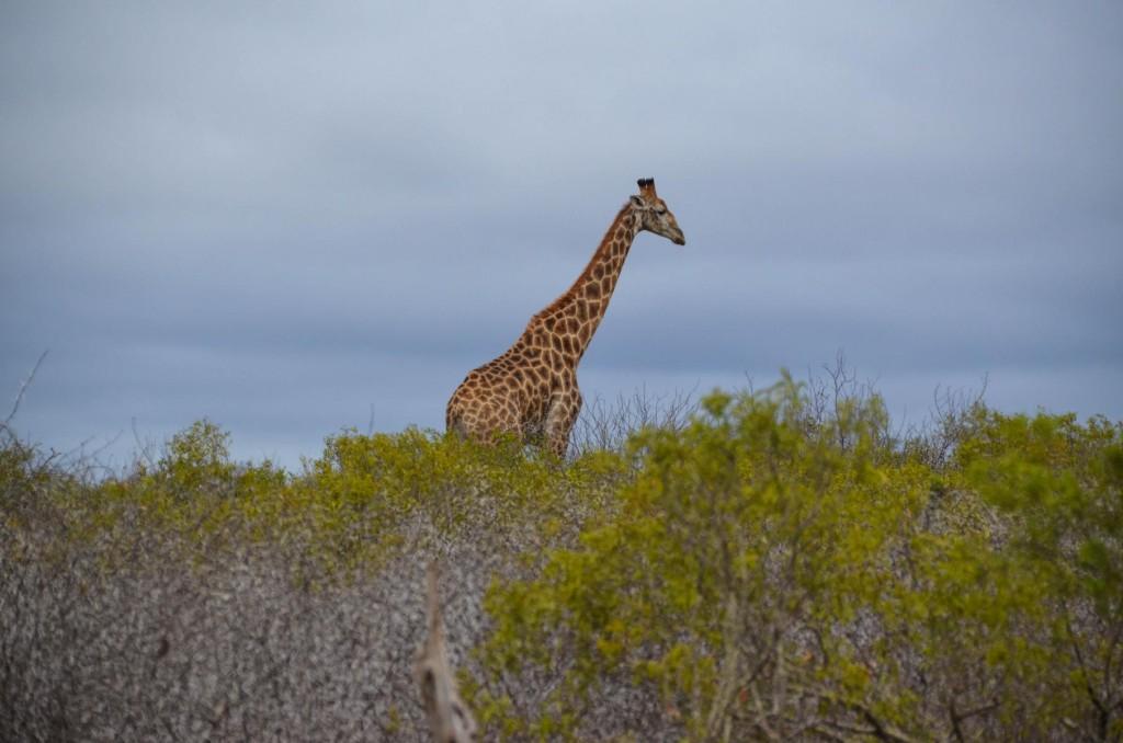 safari (83 von 129)