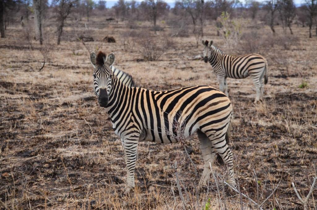 safari (89 von 129)