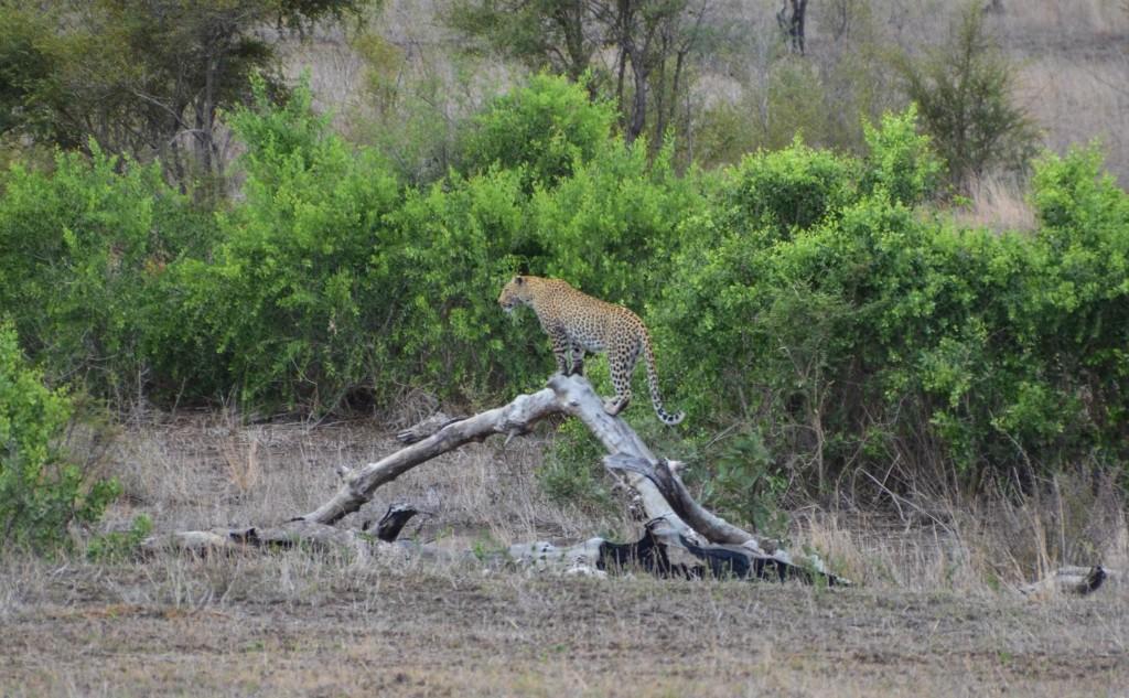safari (93 von 129)