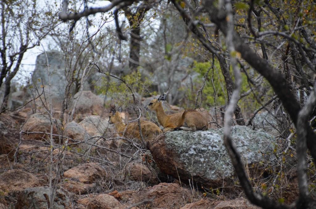 safari (95 von 129)