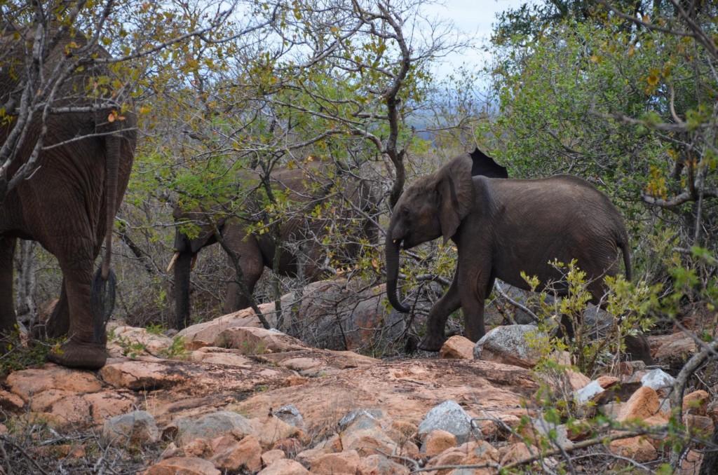 safari (98 von 129)